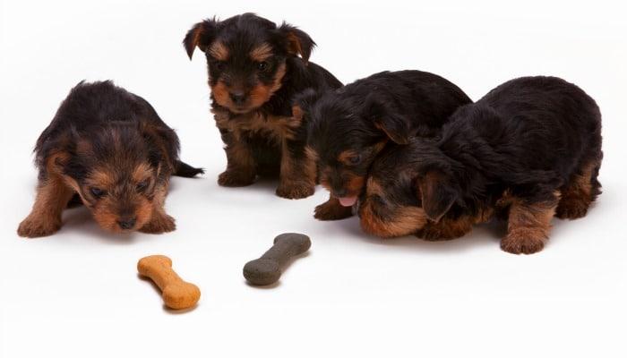 Percentage Of Dog Bought At Pet Shop