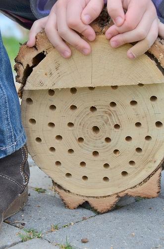 Christmas tree bees nest