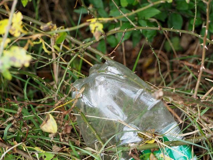 plastic bottle in a bush