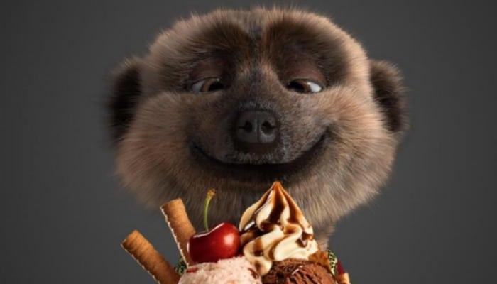 Oferta de comida y películas de suricatas