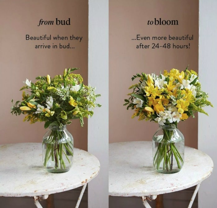bloom and wild free flowers