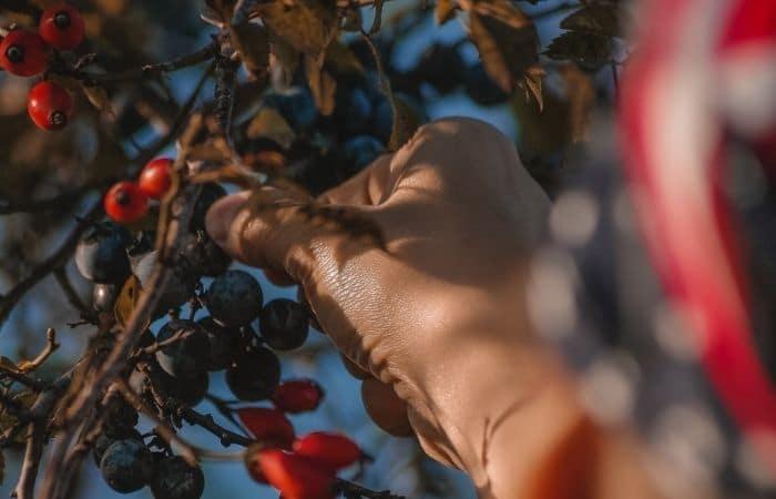 fruit picking jobs near me