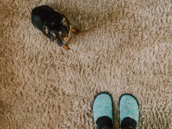 view of dog and feet on carpet
